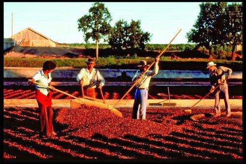 Fairtrade koffiebonen
